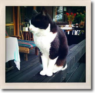 AbeSako_cat_0.jpg