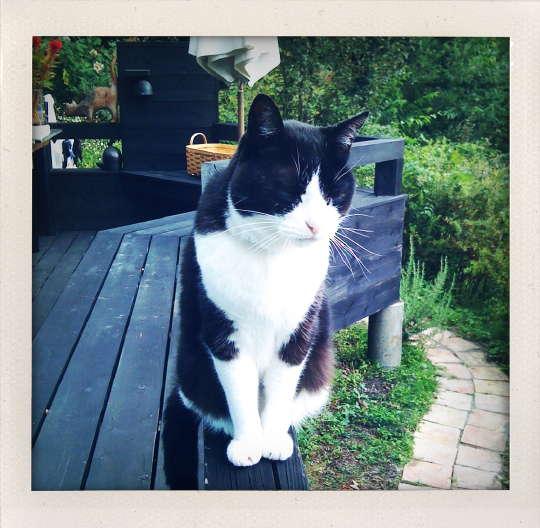 AbeSako_cat_2.jpg