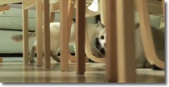 IKEA_cats_0.jpg