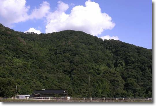 Kakinoki100928_0.jpg