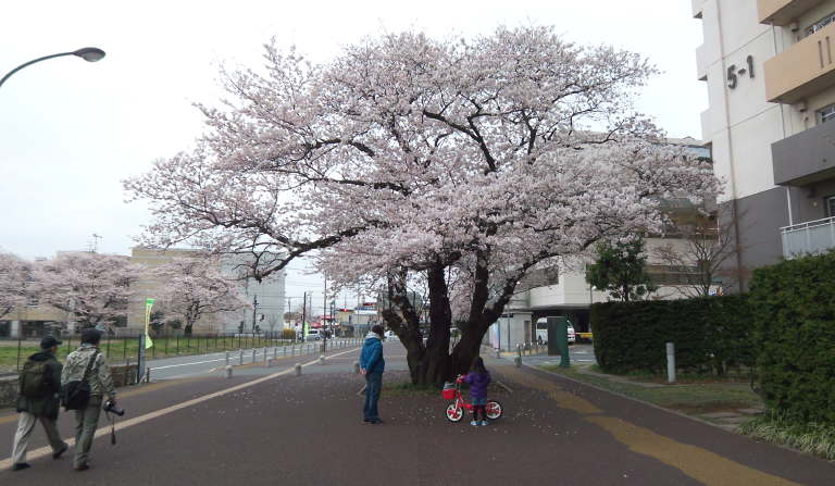 Kokubunji100404_1.jpg