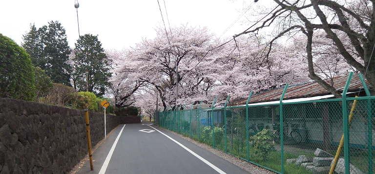 Kokubunji100404_2.jpg