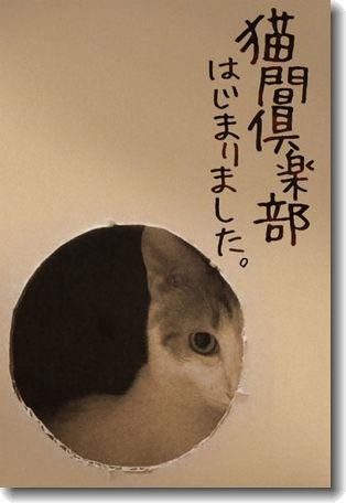 Nekoma_club_0.jpg