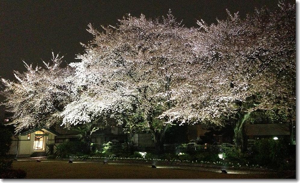 Okumura_130402_10.jpg