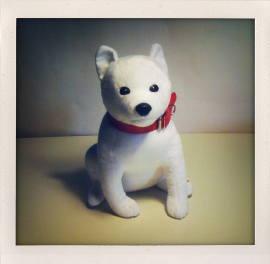Softbank_dog_0.jpg
