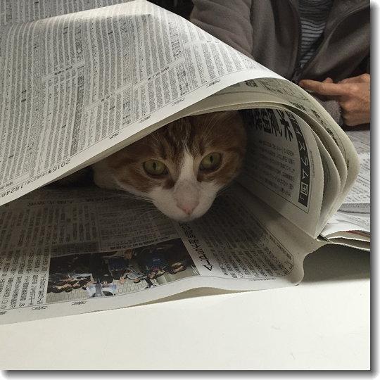 TAN_newspaper_0.jpg