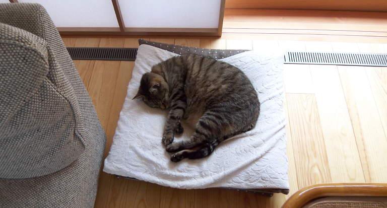 cat_izumo_090416_1.jpg