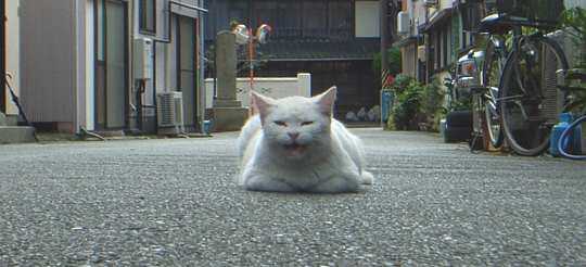 cat_kanbara071111_0.jpg
