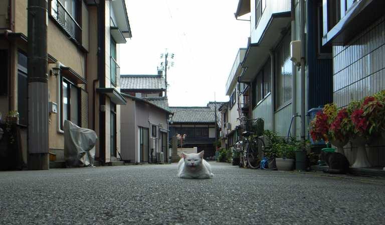 cat_kanbara071111_1.jpg