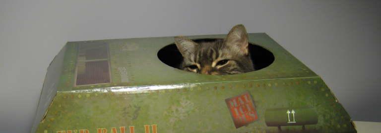 cat_tank_10.jpg