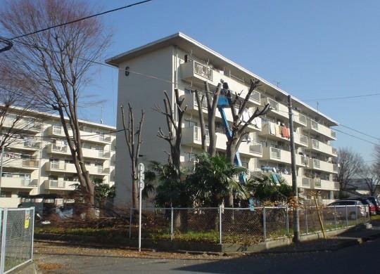 keyaki_041218_1.jpg