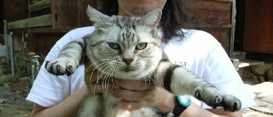 kiso_cat_0.jpg